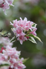 Nature being perfect once again (Joey Dunne) Tags: pink nature beauty gardens pretty ethereal