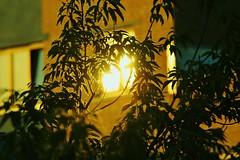 Morning flick (Mindo_) Tags: flick sun reflection bright