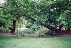 A piedi nudi nel Parco... Sempione! (sirio174 (anche su Lomography)) Tags: parco milan primavera walking spring milano barefoot parcosempione passeggiata sempione barefootinthepark piedinudi