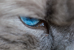 Eye of the tiger - sorry: cat    (Helios-44M) (Lena_CS) Tags: macro eye cat helios helios44m cateye