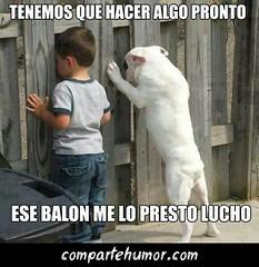 Animales (Comparte Humor) Tags: amigos amigo humor perro perros animales pelotas imagenes nino mascota mascotas pelota graciosas balon ninos risas balones playstore compartehumor