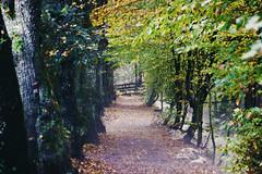 hiking path (Jules Marco) Tags: wood autumn trees canon austria leaf sterreich path laub herbst krnten carinthia avenue wald bume weg allee wanderweg waldweg maibachl villachwarmbad eos600d tamron18270mmf3563diiivcpzd