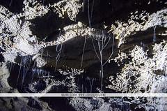 Waitomo Glowworm Caves (Naomi Rahim (thanks for 2 million hits)) Tags: waitomo newzealand nz 2016 northisland glowwormcaves cave grotto nature landscape wanderlust nikon nikond7000 travel travelphotography cobwebs webs glowwormwebs