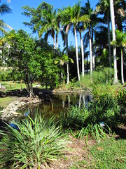 Lily pond (underdreamskies) Tags: lilypond edisonfordwinterestate