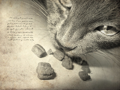 You own a dog but you feed a cat.  ~Jenny de Vries