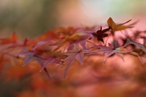 紅葉 / Daydream
