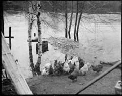 Flood New England (Boston Public Library) Tags: weather storms floods lesliejones