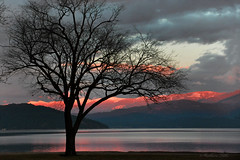 """""""Nature is painting for us..."""" (misst.shs) Tags: november sunset reflection tree silhouette clouds nikon lakependoreille snowcappedmountains hss hcs northidaho d90 cabinetmountains sandpointcitybeach clichesaturday sliderssunday"""