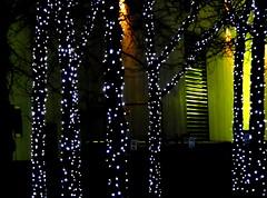 lit trees (dmixo6) Tags: november light urban toronto canada dark gta dugg dmixo6