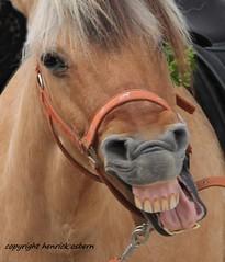 reaction on henrick osbern (henrick.osbern) Tags: horses horse canon fun bayern deutschland eos riding laugh lachen pferd reiten horseriding henrick springen wow1 wow2 1001night springreiten 60d flickraward ringofexcellence osbern henrickosbern