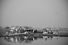 lay of the rotten land #2 (parth joshi) Tags: morning birds river random delhi pollution winters musings boattour yamuna brownheadedgull nigambodhghat
