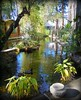 ~~A CaliFoRniA WiNtEr #1~~ (TravelsThruTheUniverse) Tags: ponds tropicalplants exoticgardens wow1 waterfeatures zengardens asiangardens tropicalgardens tropicalfoliage californiagardens waterinthegarden subtropicalgardens 100commentgroup tropicallandscapes subtropicallandscapes