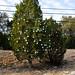 360_Trees_2011_087