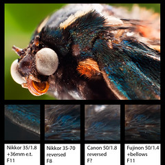 Comparison Of DIY Macro Solutions (Terapixel) Tags: macro butterfly makro comparison schmetterling vergleich