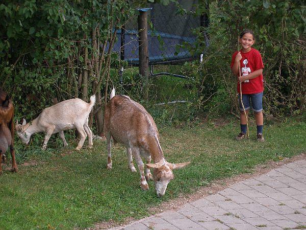 Kind mit Tiere