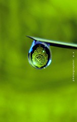 ( Explore) (U.V ) Tags: new macro beautiful by canon lens nice flickr photographer shot good uv 100mm explore usm haifa ef d500 128    2011