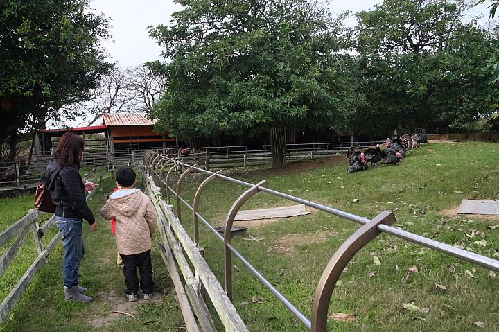 吳厝楊家莊農場(正隆休閒農場)011