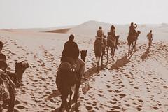 (Zhenya bakanovaAlex Grabchilev) Tags: bw india desert camel caravan thar rajasthan