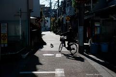 (Masakazu Ikeguchi) Tags: street japan cat tokyo straycat