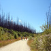 Walking in the Burned Forest