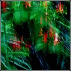 Vermelho sobre o verde (Paulo JS Ferraz) Tags: red verde vermelho gr ge abstrato x5 16003