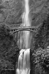 multnomah falls (tahig) Tags: infocus highquality