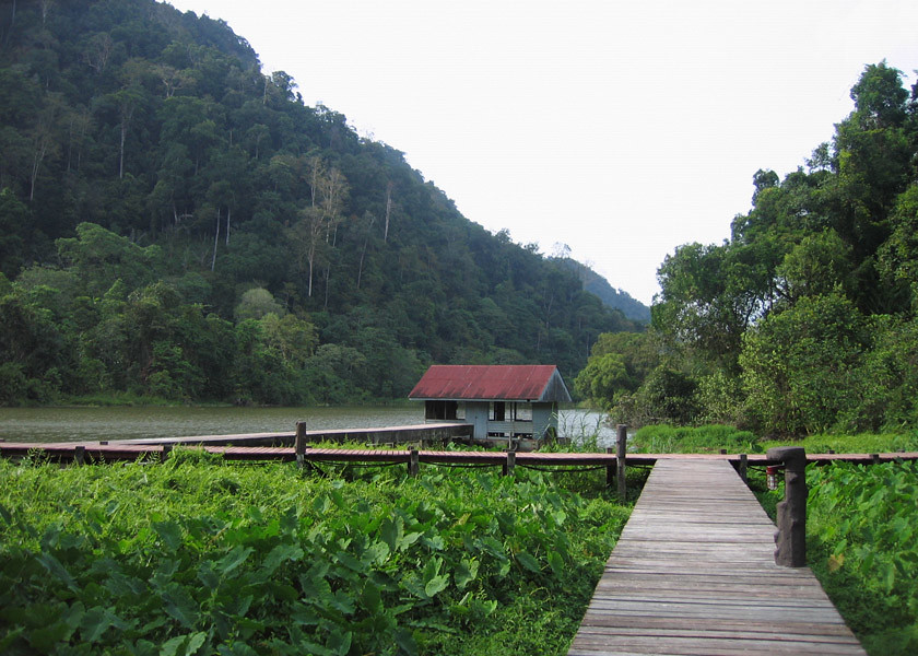 Boardwalk view, Thale Ban National Park