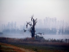 A Tree in the Fog (Fountain Grass) Tags: morning tree fog canon foggy mysterious