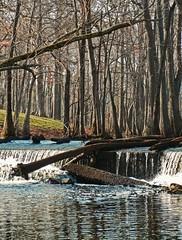 View of the Waterfalls at Bellamy Lake (EdgecombePlanter) Tags: nature water creek nc pond stream lakes peaceful waterfalls swamp cypress serene streams nash halifax ponds naturalarea fishingcreek