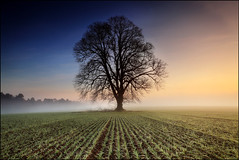 Lime Tree Meikleour (angus clyne) Tags: blue winter light red orange mist cold tree green art field barley fog forest photoshop print landscape dawn scotland warm frost branch angle tim