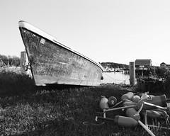 Maine (mrcrontab) Tags: 120 mamiya grass 35mm mediumformat harbor boat fishing 645 maine rowboat mf 6x45 ultrawide manualfocus buoy mamiya645 boey portra160vc bouey blackandwhiteconversion mamiya645protl mamiya35mmf35 mamiya35mm