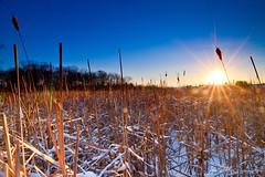 1.22.12 - Milford, MA (Jamie Ivins) Tags: blue winter orange snow ice colors sunrise canon sigma cattails swamp flare sunburst marsh hoya singray 5dmarkii 5dm2 jamieivins jamieivinsphotography