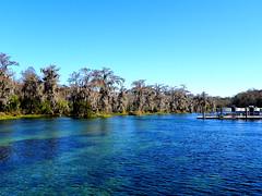Wakulla Springs in winter (Sunshynest8) Tags: plants lake water landscape pond scenery peace scenic calming peaceful lagoon calm cypress wakulla wakullasprings wakullariver wakullaspringsstatepark sunshynest8 twscalendar