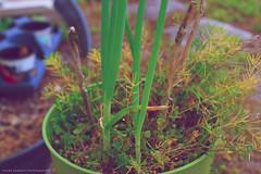 Green plant (hypnotize4121) Tags: trees plant green grass 35mm sam bright sony alpha f18 omg a77 dslt