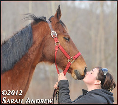 Stiletto Slim and Kate at Scarlet Rose Farm Equine Rescue in CT (Rock and Racehorses) Tags: rescue rose scarlet slim connecticut ct american asb saddlebred srfer ska4957