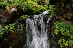 Samons, Haute-Savoie (Micleg44) Tags: mountain france alps montagne alpes jardin botanique hautesavoie samoens rhonealpes jaysinia vision:outdoor=0945 vision:plant=0733