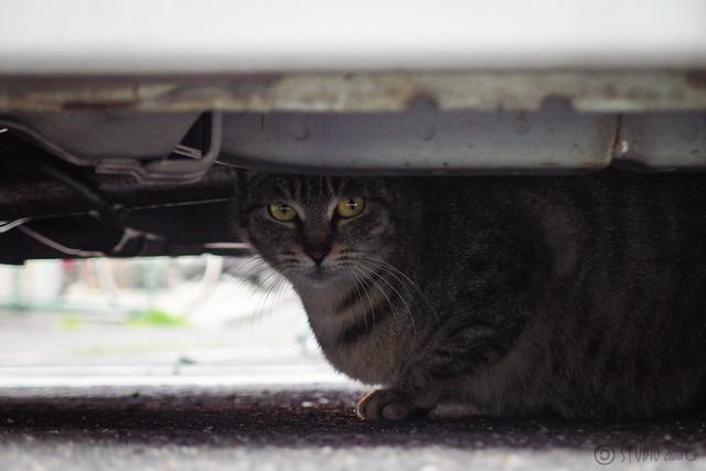 Today's Cat@2014-04-07