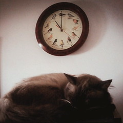 The clock. (yukilettice) Tags: cats cute clock cat time sleep catlover