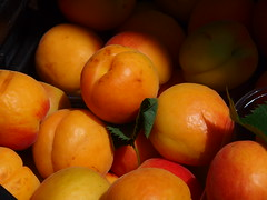 Apricots (Michele Grazia) Tags: fruit apricot