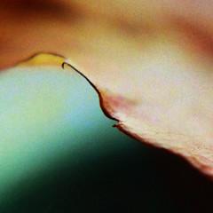 LEAF EDGE (Carlin Felder) Tags: autumn macro green leaf edge noise hoya