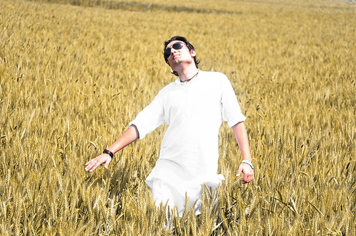 Kuber in Wheat Fields