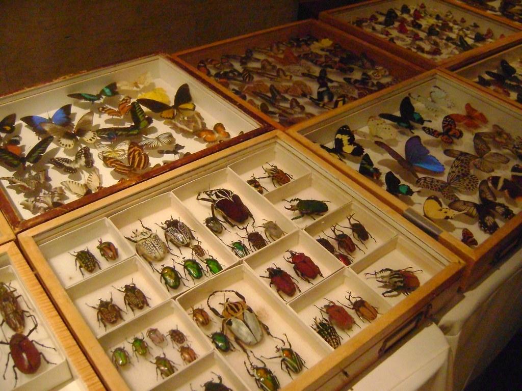 Natural History Museum Bug Fair