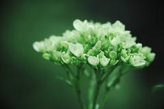 Flower and light (Edi Eco) Tags: light brazil flores flower macro verde luz nature azul brasil canon natural natureza flor 100mm 7d 28 turismo campos passeio jordao gruta camposdojordão crioulo