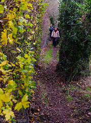 DSCF0162.jpg (Rod Grable) Tags: uk walking landscape countryside preston hertfordshire hitchin ramblers herts charlton x100 englend greatoffley nhrg