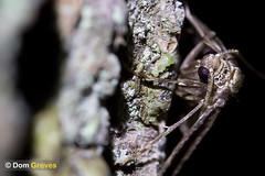 Winter Moth Trap (Dom Greves) Tags: december moth night nocturnal oak surrey tree uk wildlife winter woodland wintermoth behaviour