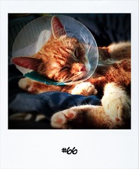 """#Dailypolaroid of 4-12-11 #66 #fb • <a style=""""font-size:0.8em;"""" href=""""http://www.flickr.com/photos/47939785@N05/6479026499/"""" target=""""_blank"""">View on Flickr</a>"""
