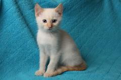 Sitting Well (LadyDayDream) Tags: blue orange white cute fur aj grey furry soft basket bell gray kittens kitties nala tybalt ajani