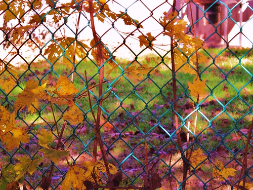 late November fun fence - HFF & HSS!