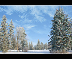 Let it snow! (Aum Kleem) Tags: winter shadow snow cold pinetree clouds frozen frost hoarfrost seasonal frosty arctic freeze chilly polar icy wintertime letitsnow frigid chill jackfrost deanmartin glacial emboss wintry elmtree jackpine coldwave gelid wintertide brumal hiemal hibernal algid aumkleem