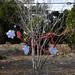 360_Trees_2011_079